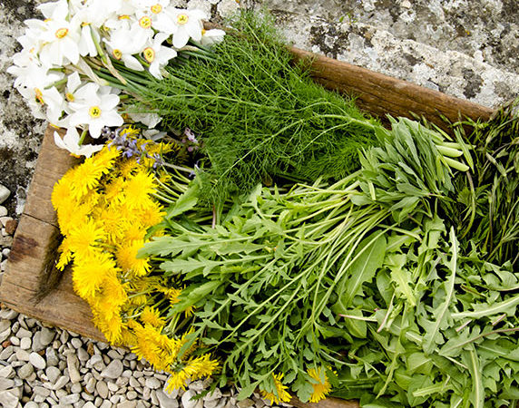 Food foraging can be a fun activity for the whole family!