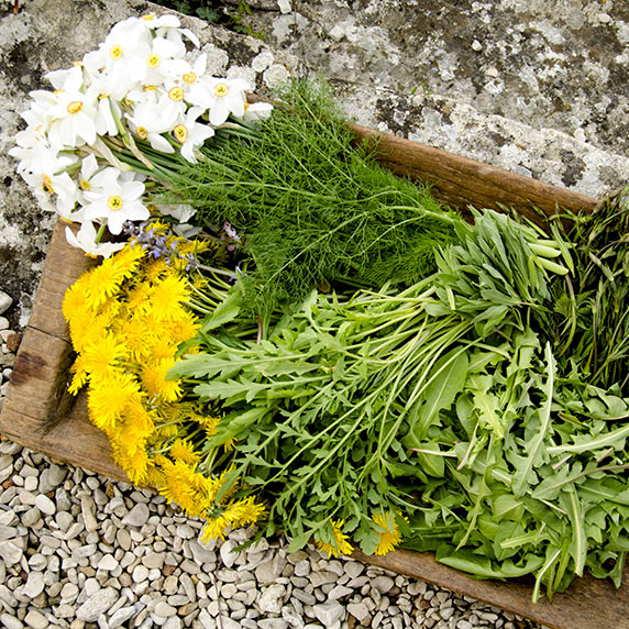 Food Foraging: Reducing Food Waste Before It Starts