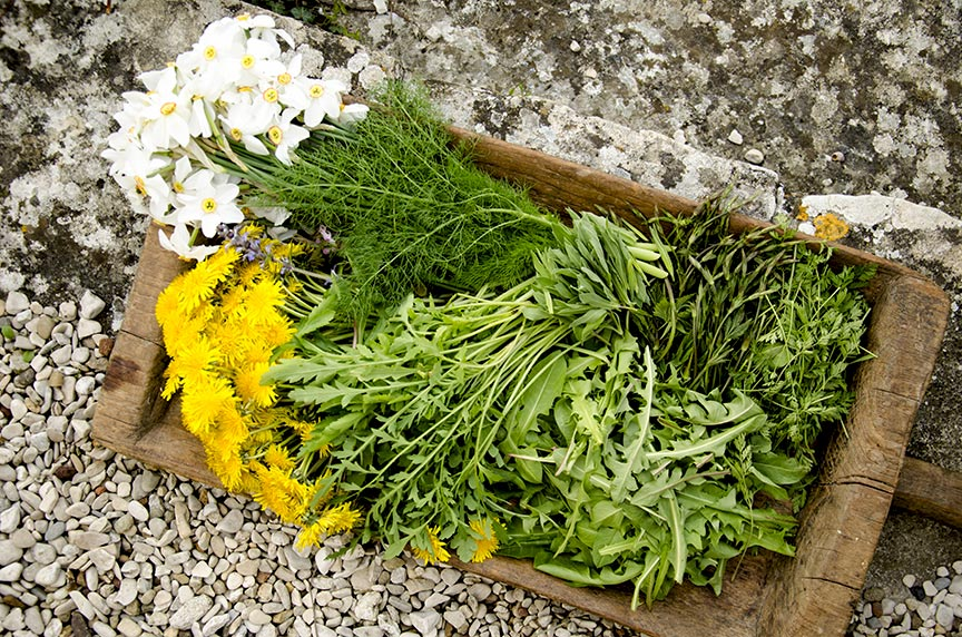 Food foraging is all about knowing what to look for and how to prepare it.